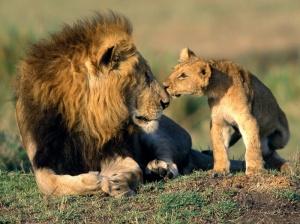 Lleó i cadell
